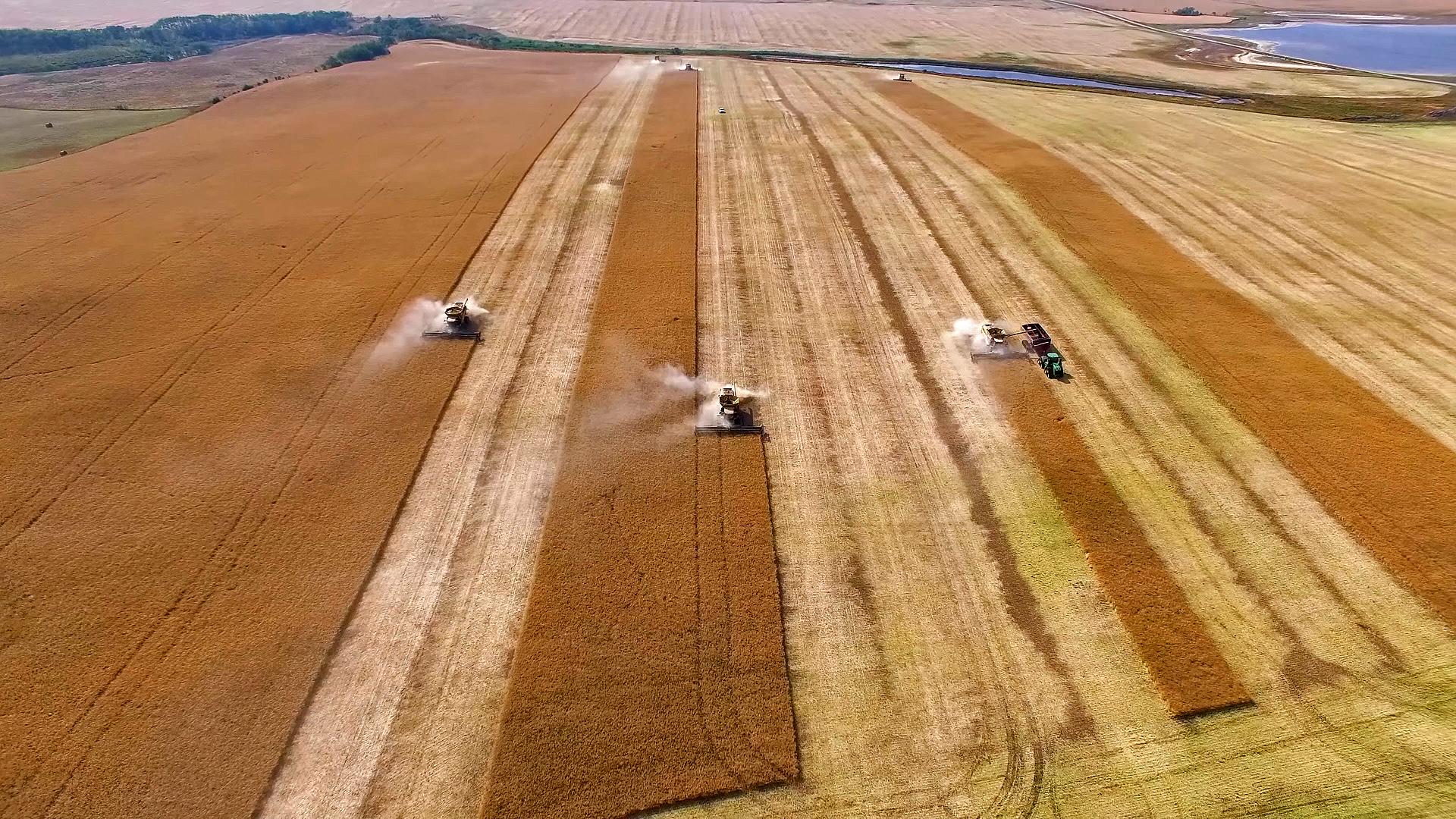 Champs de blé en pleine récolte