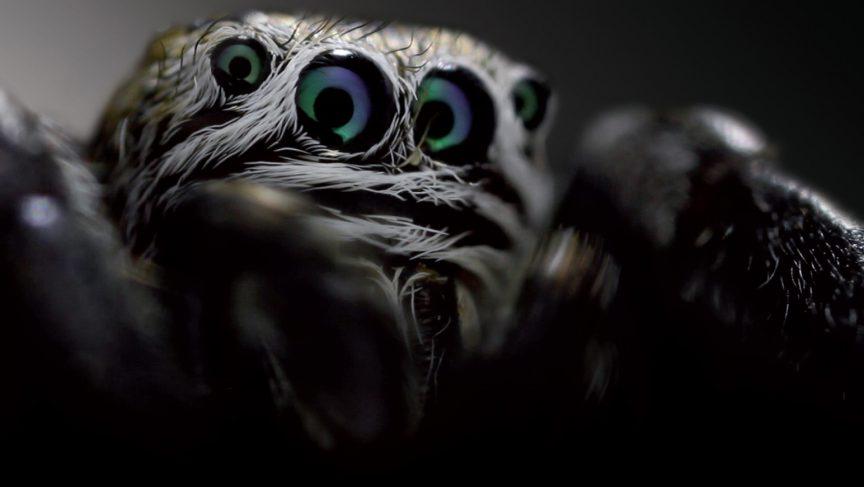 Gros plan sur une araignée