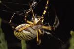 Gros plan sur une araignée qui tisse sa toile