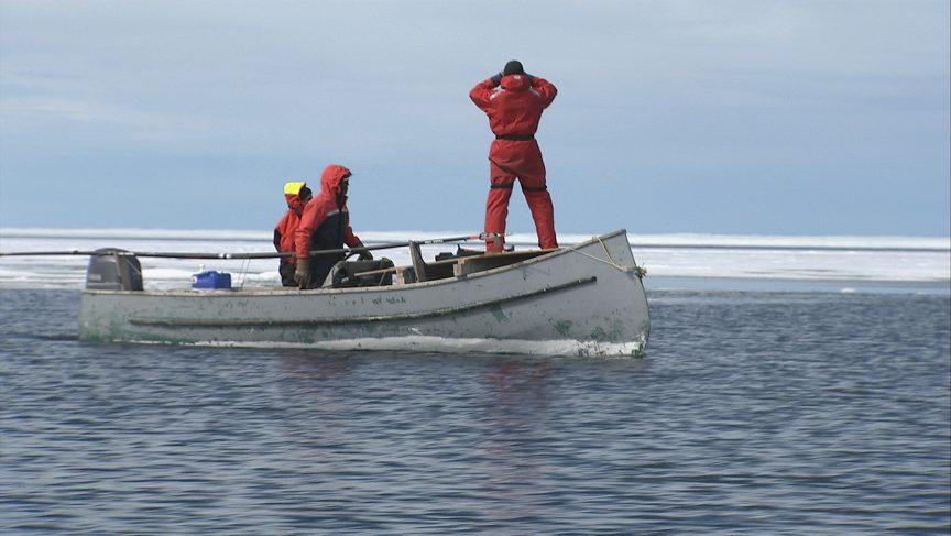 Bernard cherche une baleine